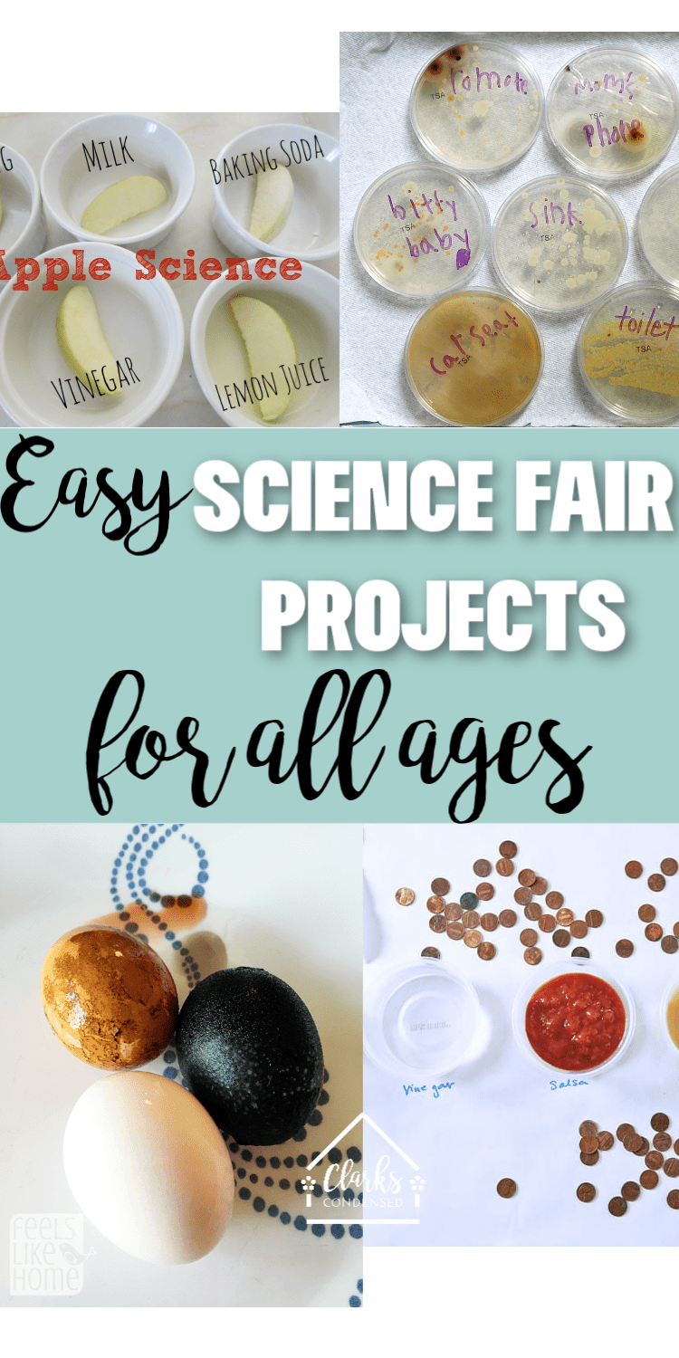 Easy Science Fair Project Ideas For All Ages And Picking The