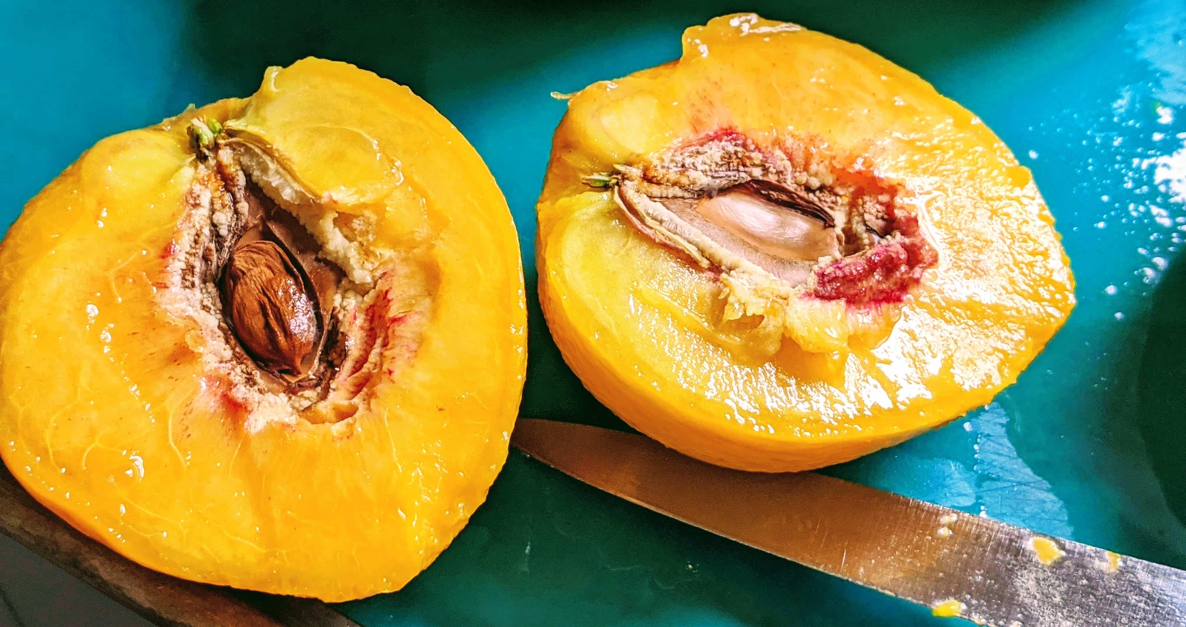 clingstone peaches