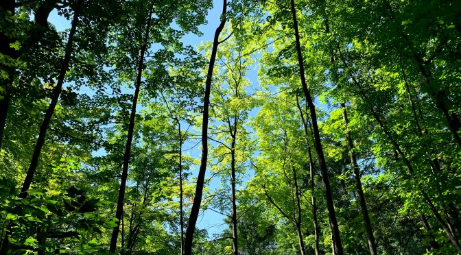 Celebrate our Trees and Natural Areas During National Forest Week