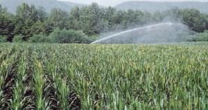 irrigare campo