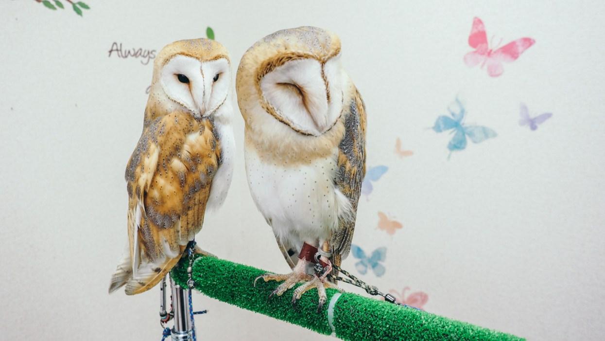 Mohumohu Owl Cafe Shinjuku