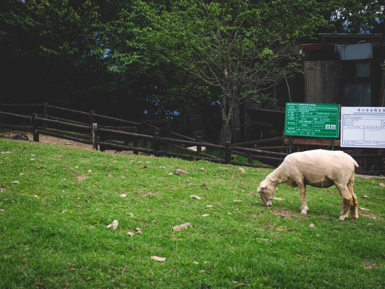 Qingjing Farm, Taiwan