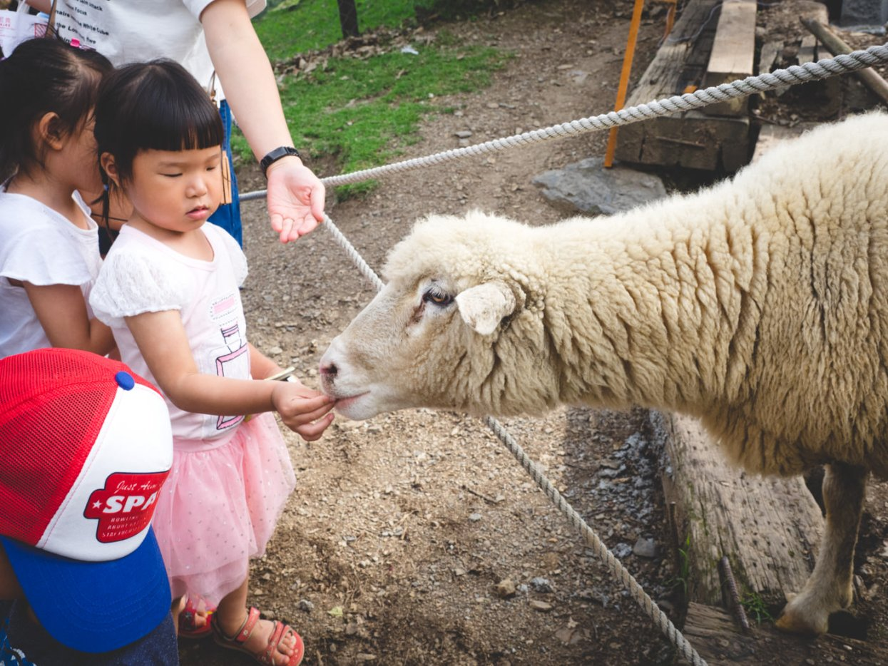 Qingjing Farm, Kids & Sheep
