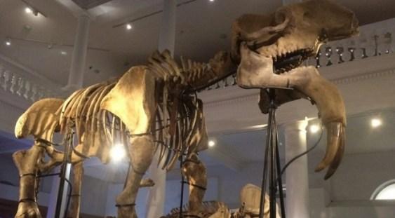 Ziua Colecțiilor Deschise la Muzeul Antipa
