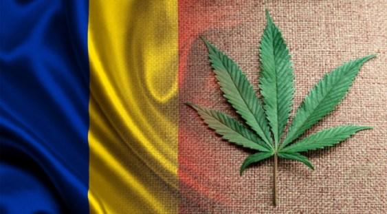 Guvernul se gândește să legalizeze canabisul în scop medical