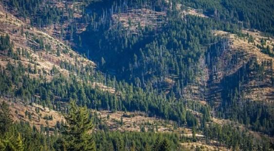 CE reacţioneză: România, în procedură de infringement pentru poluarea atmosferică şi tăierile ilegale de păduri