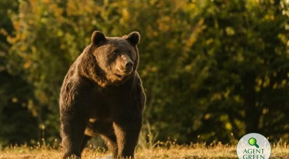 """Presa străină despre împușcarea lui Arthur: """"Cu suficienți bani poți cumpăra chiar și cel mai mare urs brun din Europa"""""""