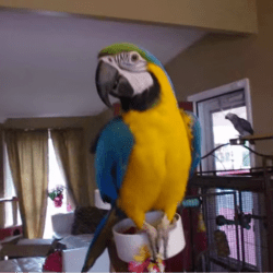 2086_macaw_parrot_20_thb - Copy