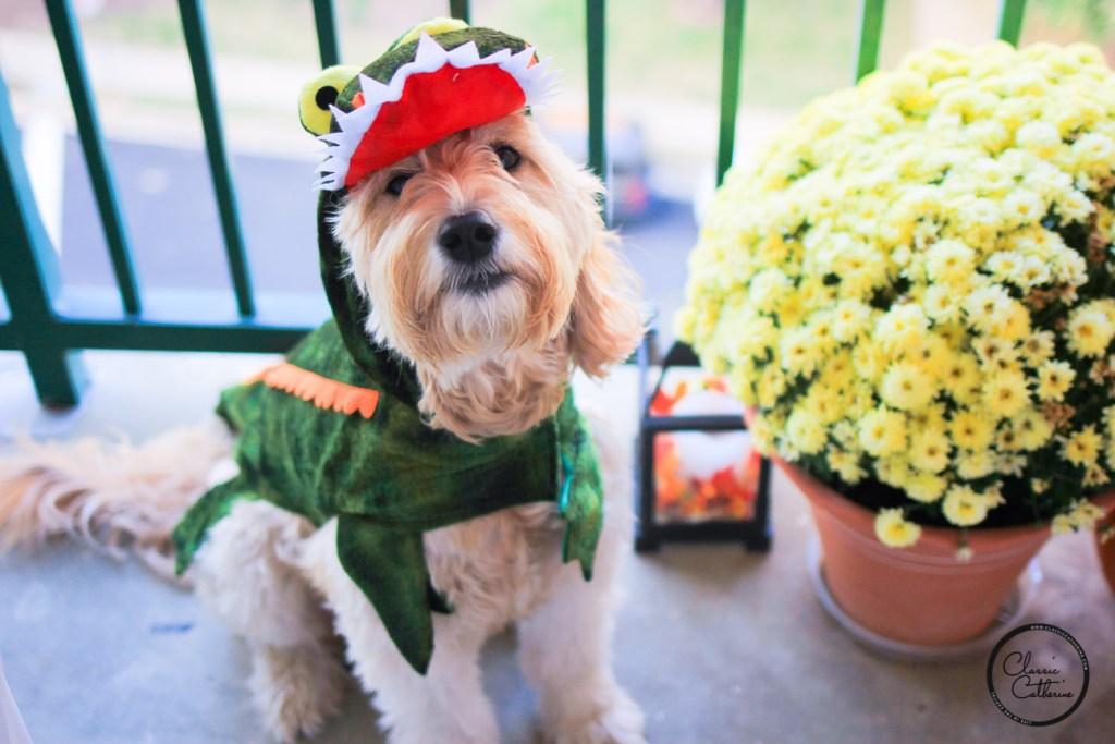 dog-gator-costume-9