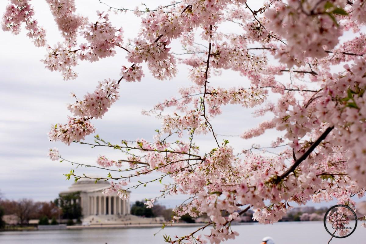 Friday Favorites No. 28: Cherry Blossom Season!