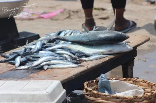 Ghana's Dwindling Fish Stock And Matters Arising