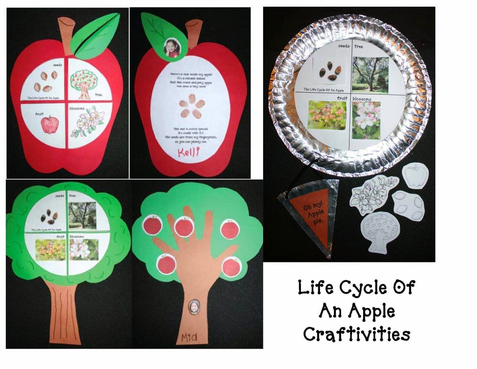 Life Cycle Of An Apple Craftivities