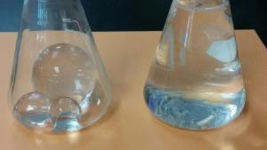 Growing spheres in flasks without and with water. Photo credit: Maralee Thorburn.
