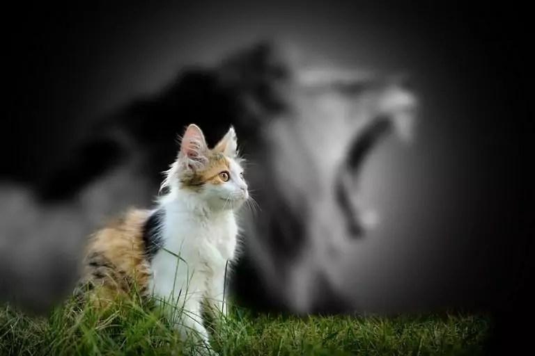Tips pour combattre le syndrome de l'imposteur – TADx – Zoom