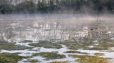 Brumes sur les étangs