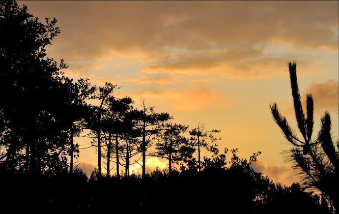 Lumière du soir sur la forêt