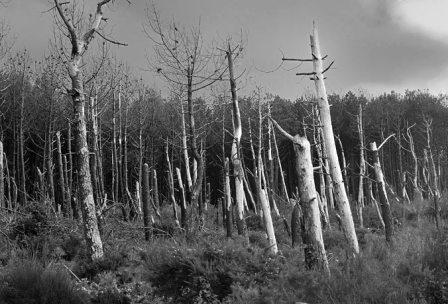 Quelques arbres morts dans la zone de protection