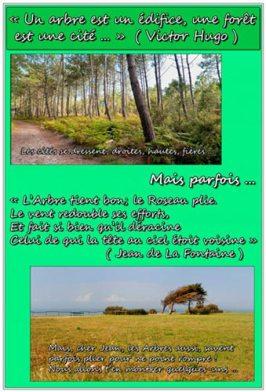 La forêt et les poètes