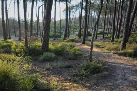 Bordure de forêt à Arna