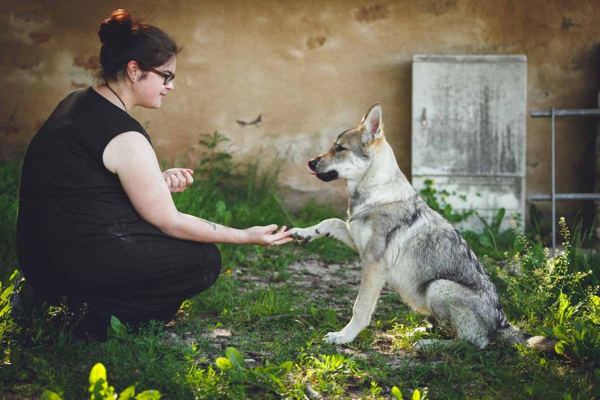 Hundefotografie mit Suko dem Tschechoslowakischen Wolfshund