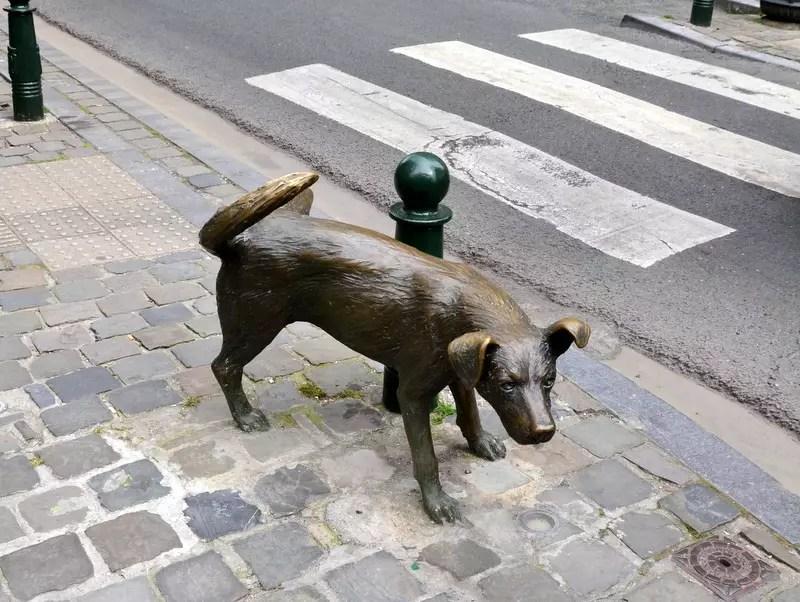 Brüssel Hund