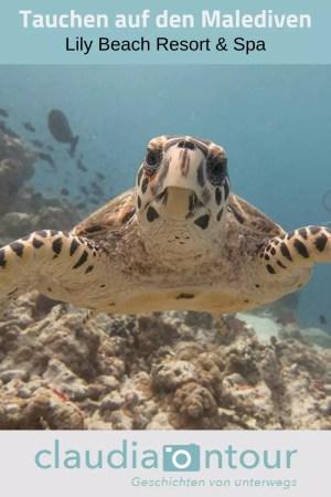Schildkröte im indischen Ozean