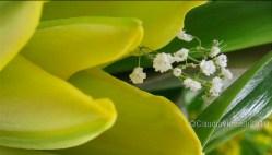 Yellow_Green_White