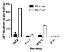 Bar chart of GFP expression vs. promoter. Shows high activity of SUC2 promoter on sucrose, and low activity on glucose.