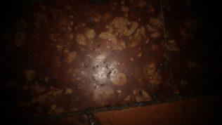 pavimento del duomo di Spoleto