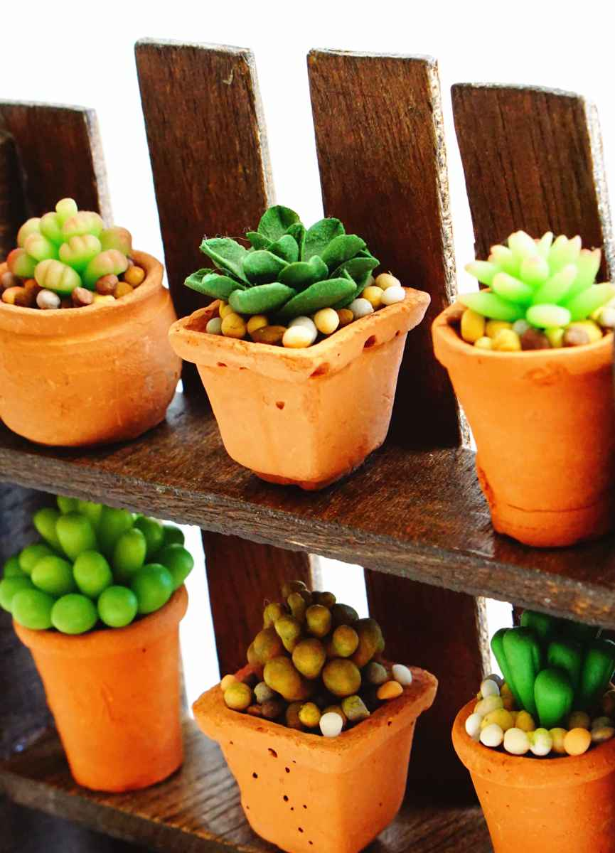 Mini Succulent Plants