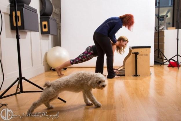 Photo of a dog doing pilates