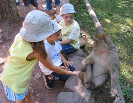 Les singes en liberté ont emerveillé les enfants ...