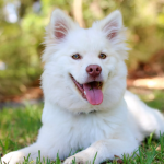 Common Problems Related to Dog's Behavior