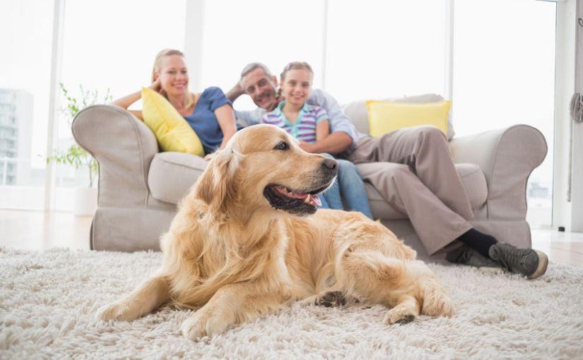 dog on a carpet