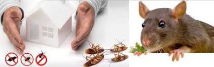 شركة مكافحة حشرات بحلي
