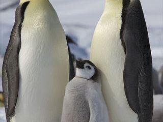 global-warming-penguins