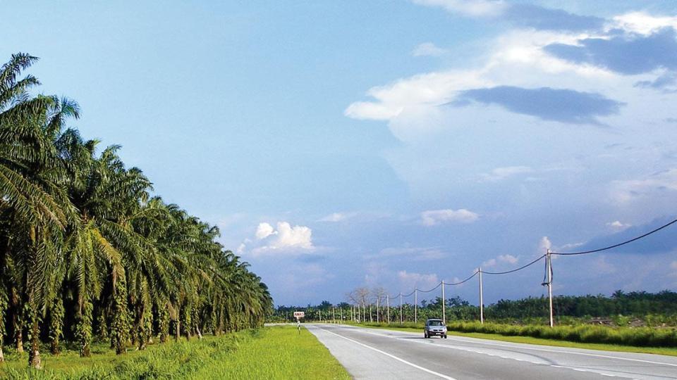 palm oil biomass