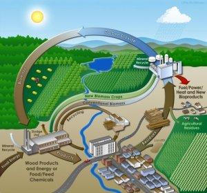 bioenergy-cycle