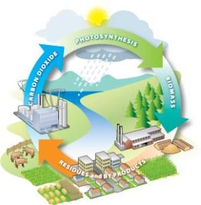 Biomass-Cycle