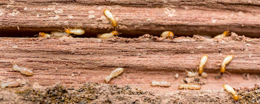 Green Ways to Prevent Pests from Entering Our Homes | EcoMENA