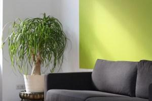 ecofriendly-home