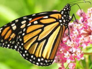 benefits-of-butterfly