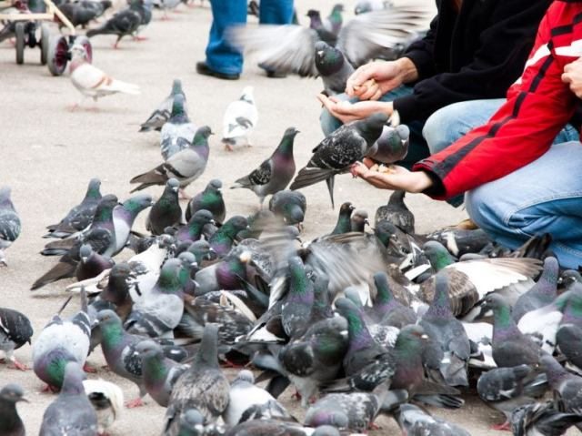 pigeon-scaring-methods