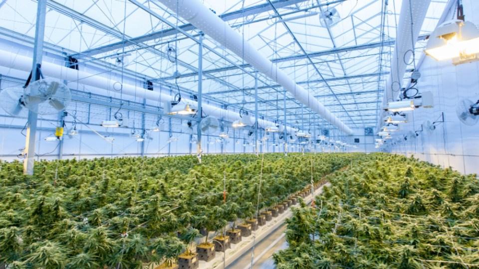 indoor-grow-room
