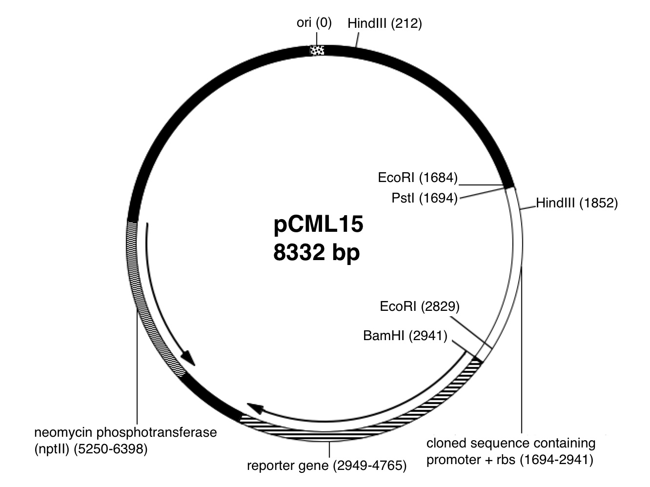 Plasmid Dna Isolation And Restriction Enzyme Digests