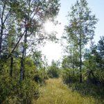 Meditation Centre Trees Path