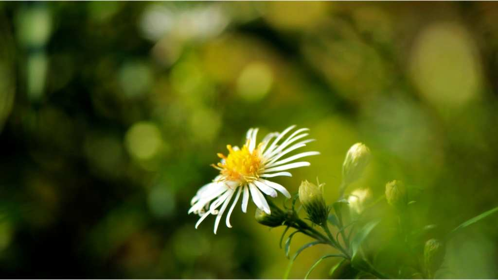 Summer Meditation Retreat: Breathing - Clear Sky Center