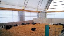 CS Gleason Cattle 01