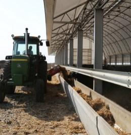 Wichmann Farms feeding livestock