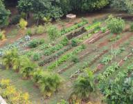 The winter garden full of a variety of fresh vegetables